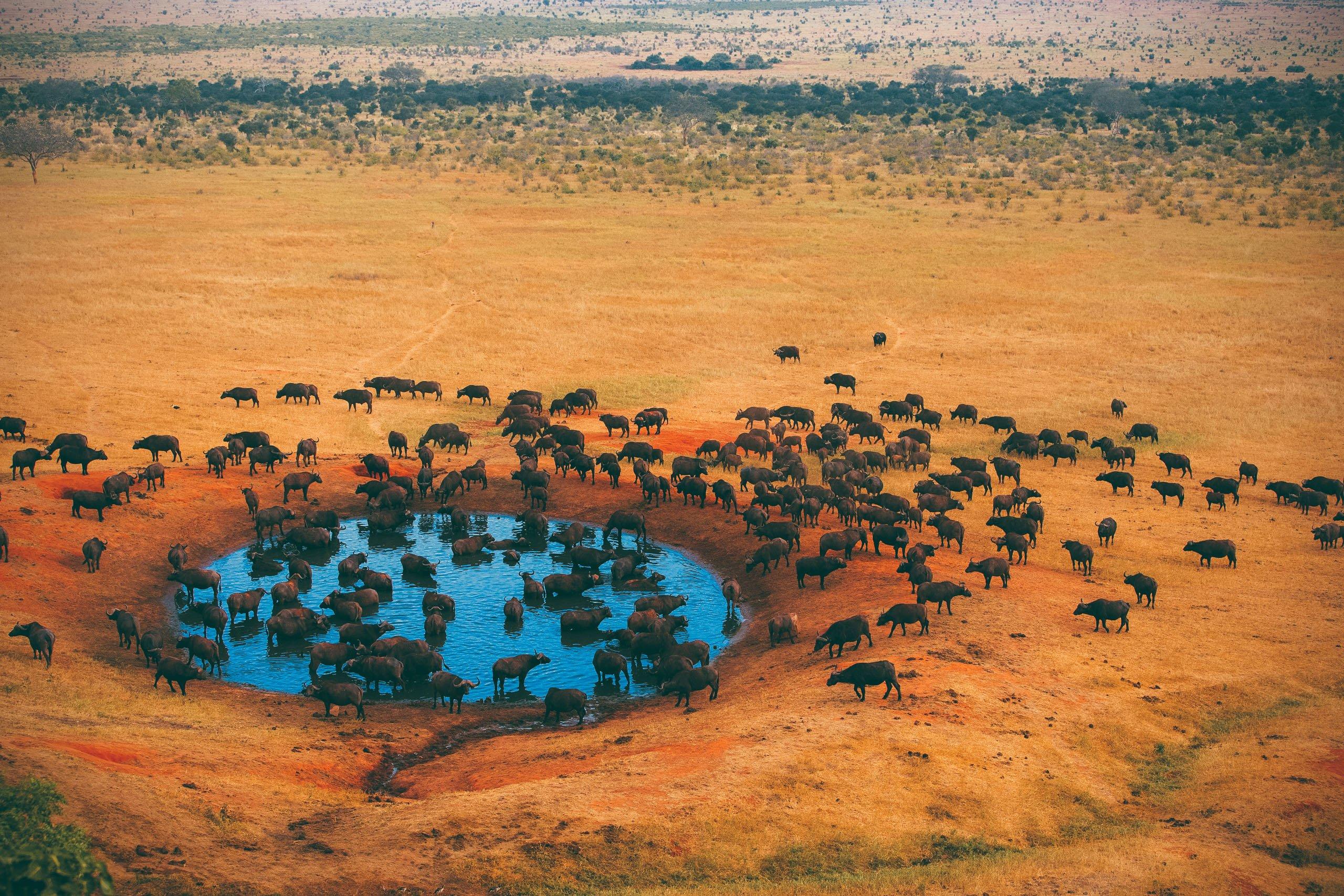 Voyage De Groupe Kenya Et Tanzanie