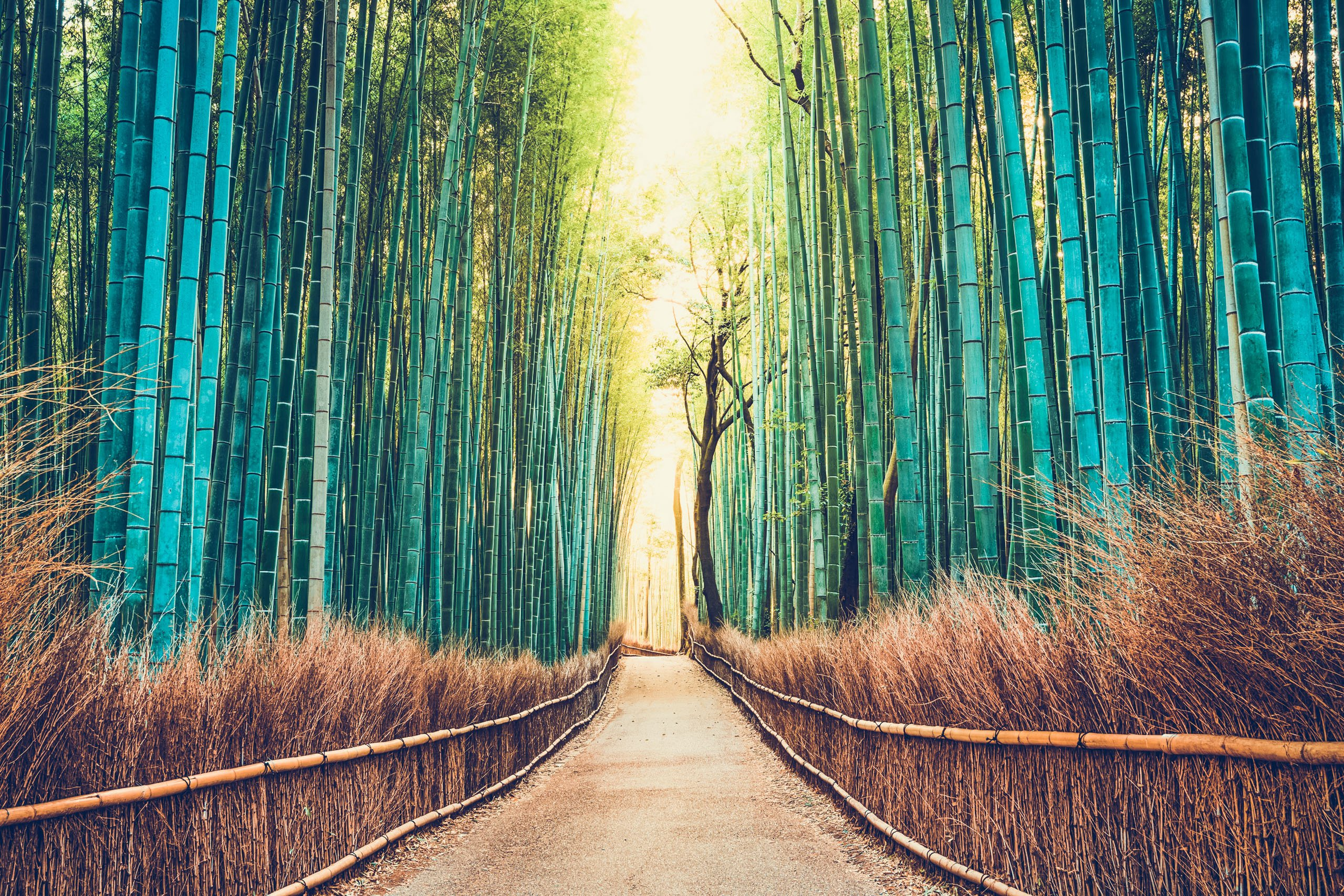 Voyage de groupe japon tradition explorateur explorateur voyages